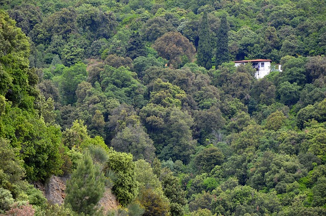 Nature, Greece, Halkidiki, Mount Athos, Holiday, Forest