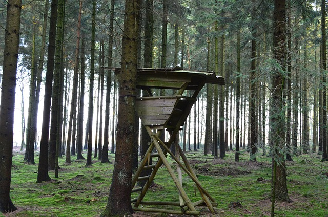 Perch, Hunter Seat, Hunting Seat, Forest