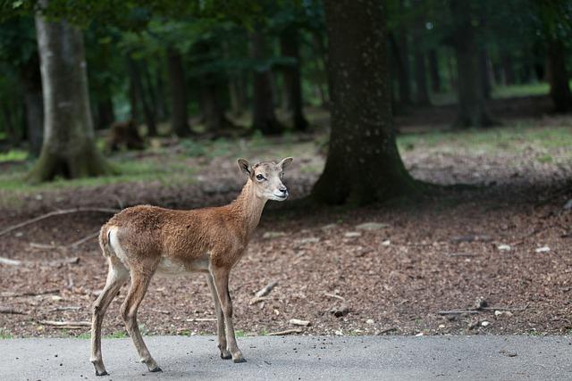 Forest, Deer, Scheu, Red Deer, Animal, Kitz