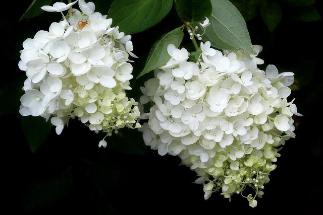 Plants, Nature, Forest, Flowers, Hydrangea, Landscape
