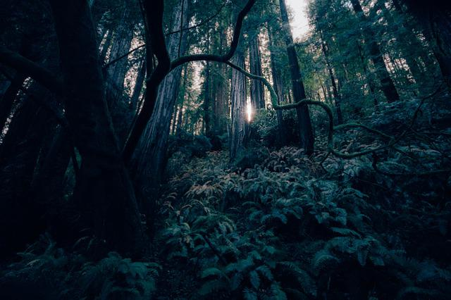 Dark, Forest, Landscape, Light, Mystery, Nature, Trees