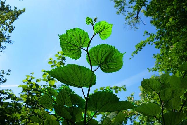 Leaf, Foliage, Branch, Tree, Forest, New Green