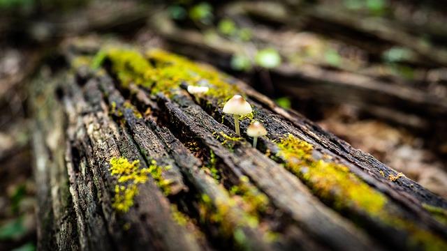Mushrooms, Dead Tree, Forest, Fungus, Lichen