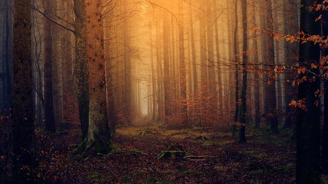 Forest, Light, Twilight, Colourless, Nature, Secret