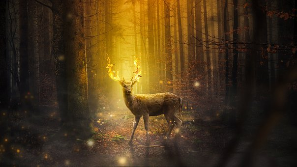Fantasy, Deer, Mammal, Forest, Nature, Outdoors, Light