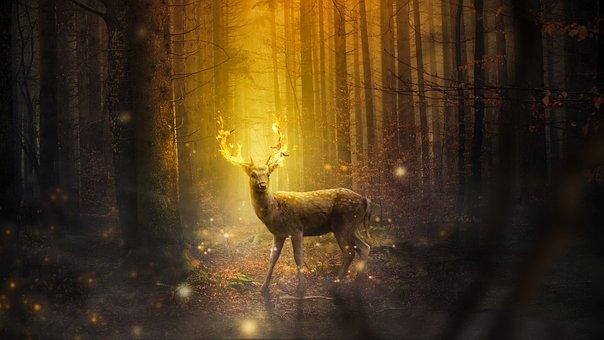 Fantasy, Deer, Mammal, Forest, Nature, Outdoors, Light