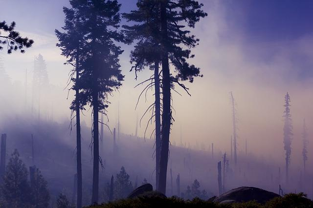 Fog, Forest, Mist, Nature, Silhouette, Trees, Woods