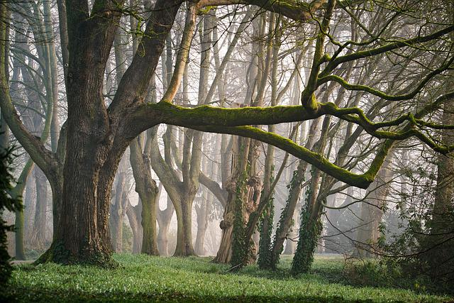 Forest, Fog, Morning, Morgenstimmung, Fairy Tales