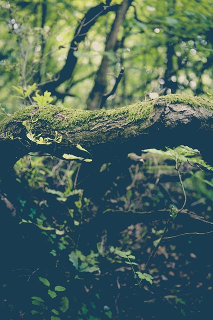Moss, Forest, Mushrooms, Tree Stump, Bach, Green, Log
