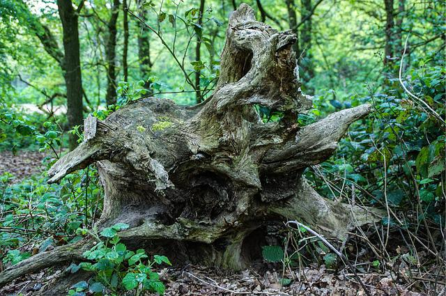 Root, Tree, Nature, Log, Forest, Moss, Natural Energy