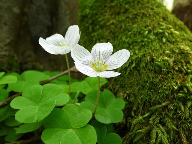 Flower, Forest, Mountain, Nature, Greenery, Tree