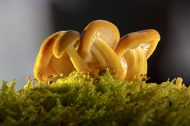 Mushroom, Mushroom Group, Nature, Forest, Moss, Close