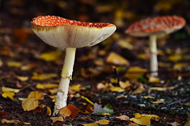 Mushroom, Fly Amanita, Fungus, Spotted, Red, Forest