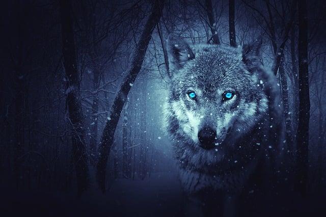 Wolf, Forest, Dark, Background, Mystical, Snow