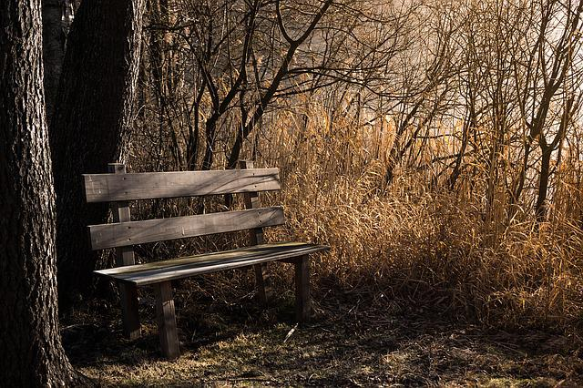 Bench, Bank, Seat, Nature, Out, Rest, Benches, Forest