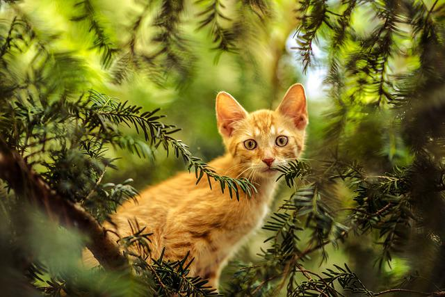 Cat, Tree, Young Cat, Nature, Forest, Red Cat