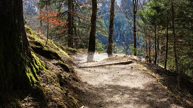 Away, Sun, Light, Forest, Descent, Nature, Autumn