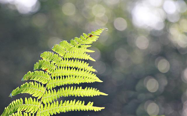 Fern, Forest, Nature, Green, Plant, Forest Plant