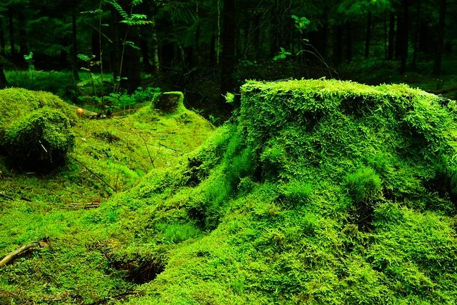 Forest, Moss, Nature, Lush, Green, Vegetation