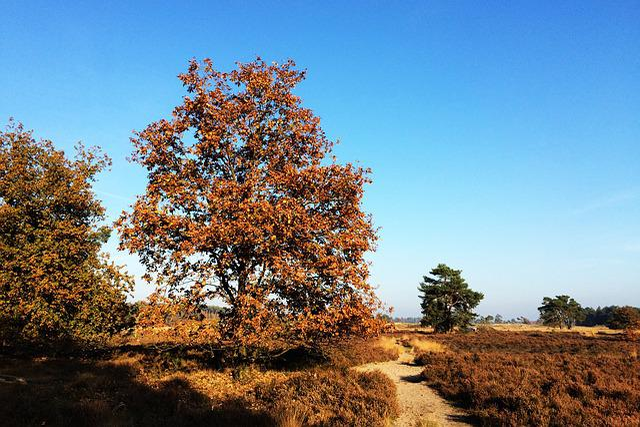 Trees, Heide, Forest, Nature, Landscape, Tree, Blue Sky