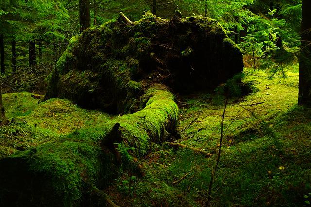 Forest, Moss, Norway