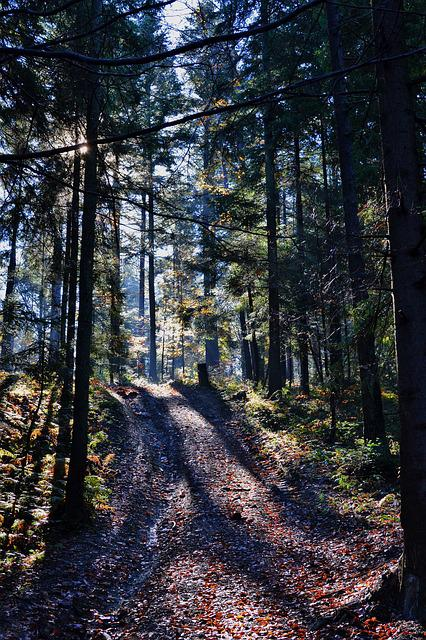 Forest, Nature, Outdoors, Path, Trees
