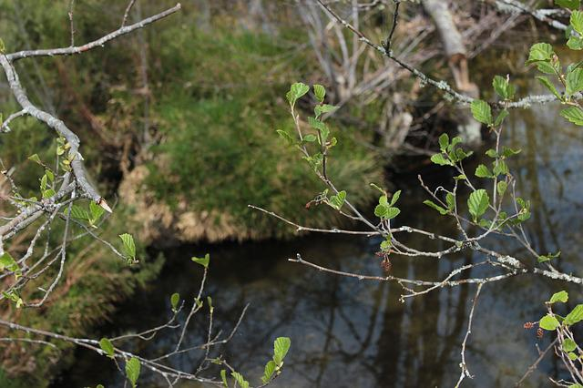 Water, Ribeiro, Park, Forest, Nature, Tree, Leaves