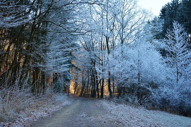 Forest Path, Winter, Hoarfrost, Forest, Cold, Wintry