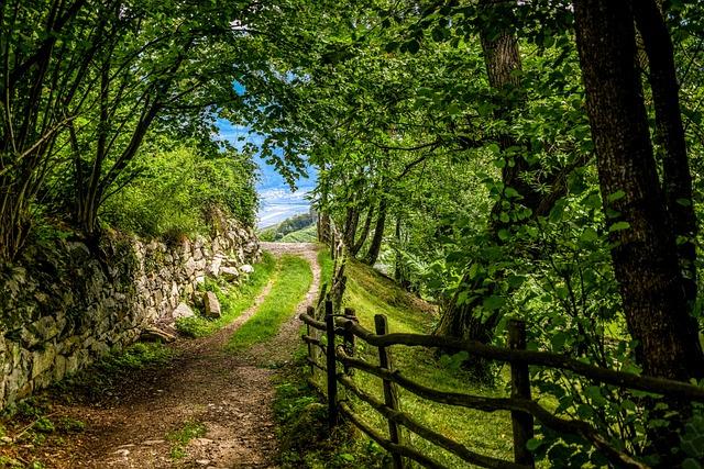 Forest Path, Romantic, Deciduous Forest, Chestnut