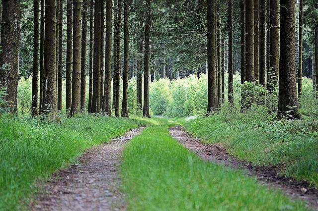 Away, Forest Path, Forest, Trees, Nature, Lane, Green