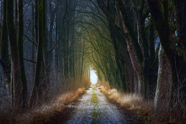 Tree, Nature, Forest, Forest Path, Lane, Away, Path