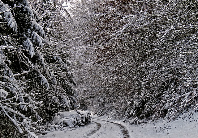 Winter Forest, Forest Path, Snow, Frost, Cold, Trees