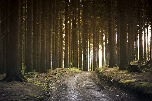Dirt Road, Forest, Landscape, Nature, Path, Pathway