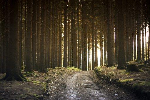 Dirt Road, Forest, Landscape, Nature, Path, Pathway