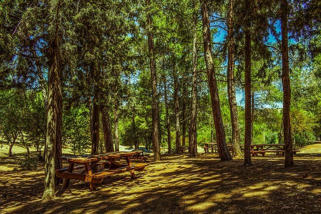 Trees, Forest, Picnic Site, Nature, Landscape