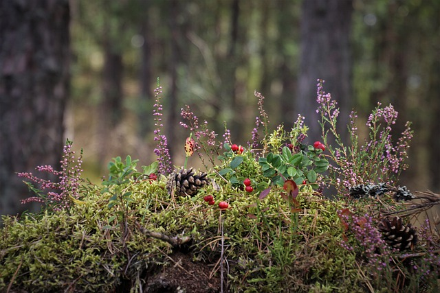 Moss, Plants, Forest, Pine Cones, Heathers, Wildflowers