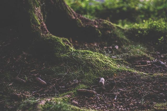 Forest, Forest Floor, Humus, Moss, Nature, Pine Cones