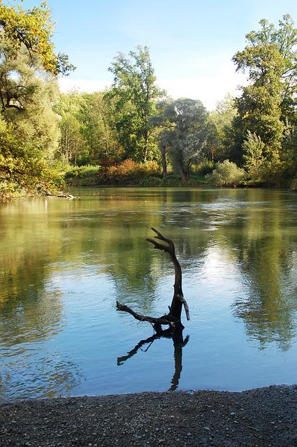 Rhine, Rastatt, Rheinauen, Lake, Park, Forest, Autumn