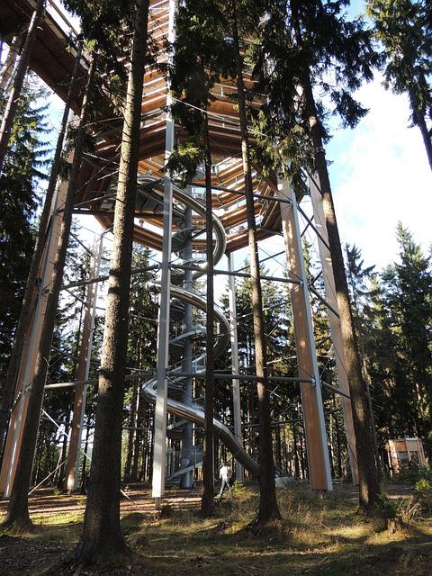 Trail Treetops, Trip, Slide, Forest Road