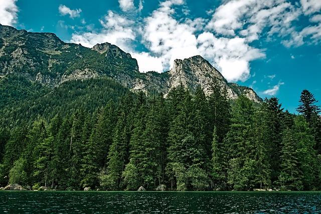 Washington, Landscape, Scenic, Forest, Trees, Woods
