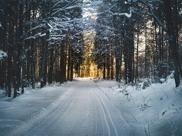 Cross Country Skiing, Forest, Snow, Snowy