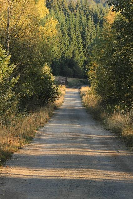 šumava, South Bohemia, Forest, Holidays, Path