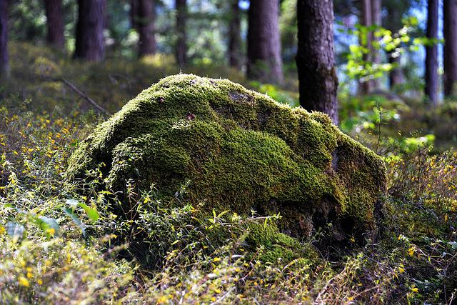 Stone, Bemoost, Forest, Nature
