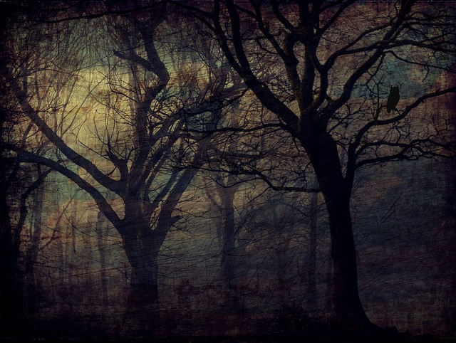 Forest, Owl, Trees, Texture, Background, Darkness