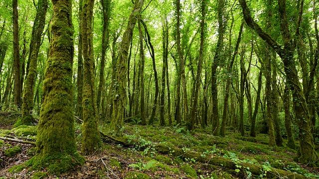 Ireland, Forest, Tree, Nature