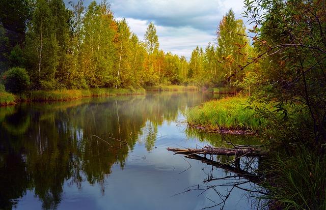 Autumn, Landscape, Pond, Forest Trees, Reflection