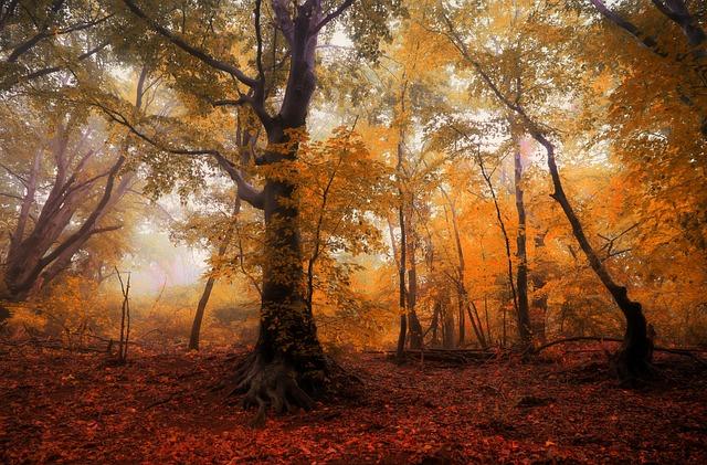Forest, Autumn, Trees, Fog, Light, Nature, Foliage