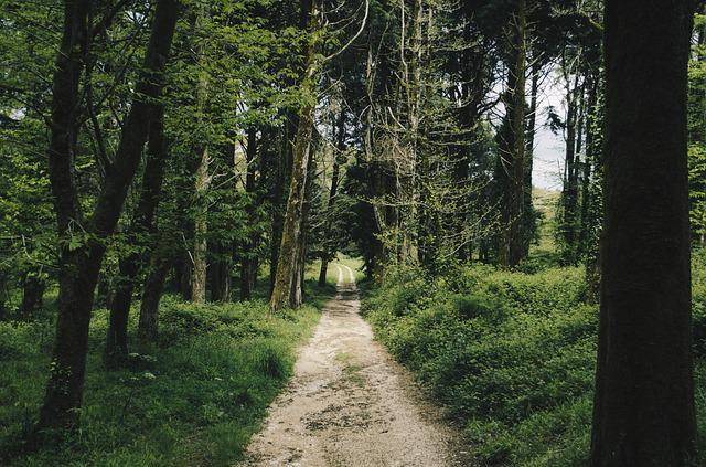 Forest, Nature, Path, Trees
