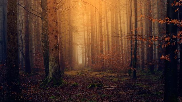 Forest, Light, Twilight, Colourless, Nature, Secret