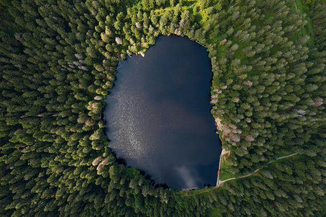 Lake, Waldsee, Forest, Water, Landscape, Nature